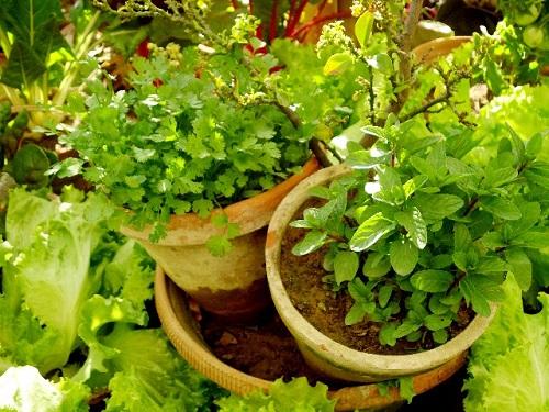 プランターで家庭菜園