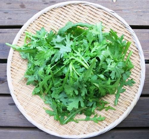 家庭菜園 初心者におすすめの野菜 春菊の育て方!