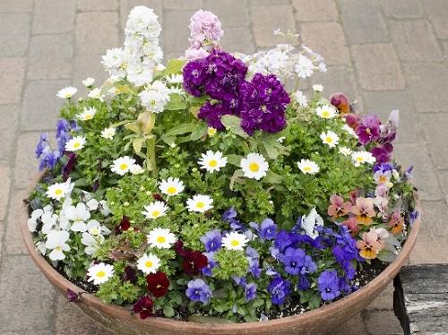 冬の花寄せ植え
