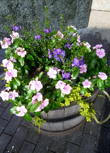ガーデニング初心者にも育てやすい冬の花 寄せ植え3選!