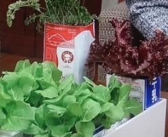 牛乳パックで野菜の育て方