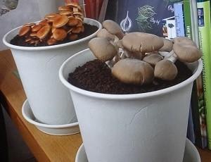 キノコ、きのこの栽培