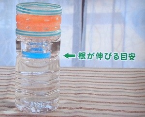 ペットボトルでリーフレタスを水耕栽培